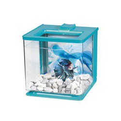 Aq EZCare MA betta, 2,5L (0,7gal),bleu MARINA Aquariums Kit