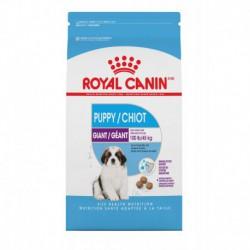 GIANT Puppy / Chiot  30 lb 13.6 kg