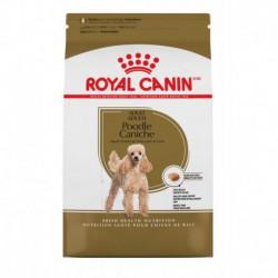 Poodle Adult / Caniche Adulte 10 lb 4.5 kg