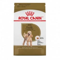 Poodle Adult / Caniche Adulte 2.5 lbs 1.1 kg