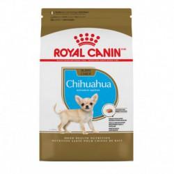 Chihuahua Puppy / Chihuahua Chiot 2.5 lbs 1.1 kg