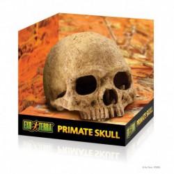 EX Terrarium Decor - Primate Skull