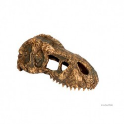 Crâne de tyrannosaure Exo Terra, petit