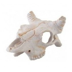 Crâne de bison Exo Terra, petit