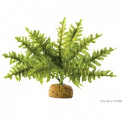 Exo Terra Boston Fern, Small-V