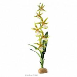 Exo Terra Spider Orchid-V
