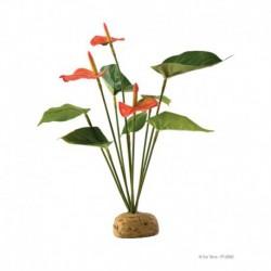 Anthurium en buisson Exo Terra-V