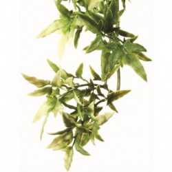 Exo Terra Shrub Plant Small Croton-V