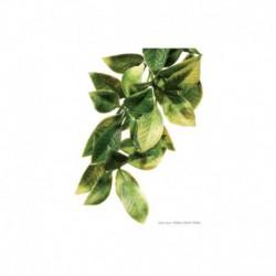 Exo Terra Shrub Plant Large Mandarin-V