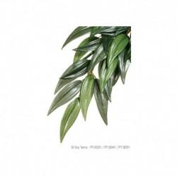 Exo Terra Plante En Soie Rucus Gr.-V