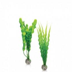 Plant Pack Medium