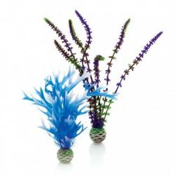 Blue / Purple Plant Pack