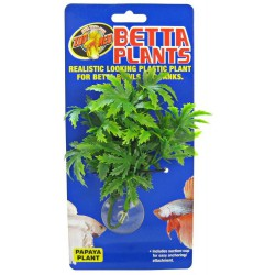 Betta Plant - Papaya