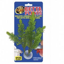 Betta Plant - Salvia