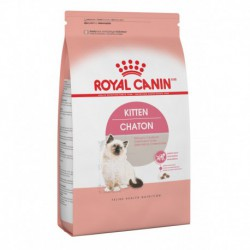 Kitten / Chaton 15 lb 6   8 kg