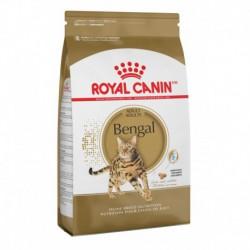Bengal 7 lbs 3   2 kg