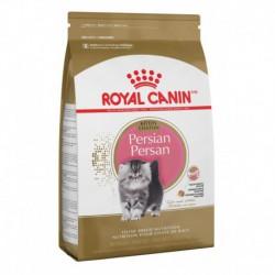Kitten Persian / Persan Chaton 3 lbs 1 4 kg