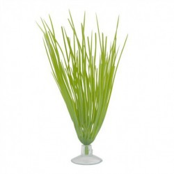 Deschampsie p. aq. MA pour betta 5 po-V