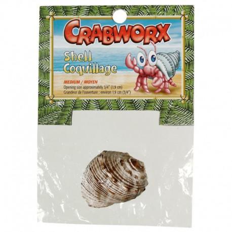 Crabworx Medium Shells-V