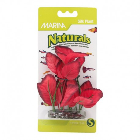 Plantes soie d¿avant-plan Nat MA, rouges