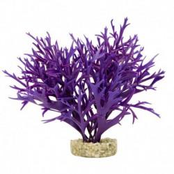 Fougère aquatique Garden Cluster, violette