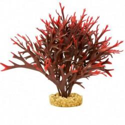 Fougère aquatique ColorBurst Floralst, rouge