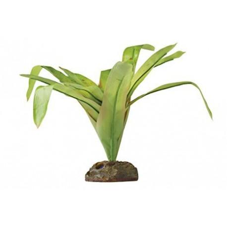 Plantes plast.