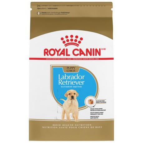 Labrador Retriever Puppy / Labrador Retriever Chiot 30 lb 13