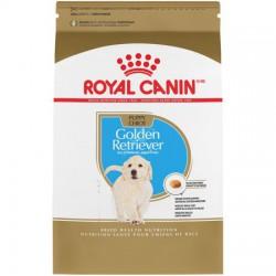 Golden Retriever Puppy / Golden Retriever Chiot 30 lb 13.6 k