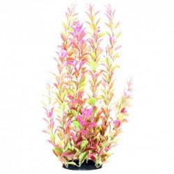 UT Plant Pink Ludwigia 14