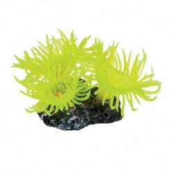 UT Sun Polyp-Mini