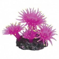 UT Sun Polyp-Med-Pink