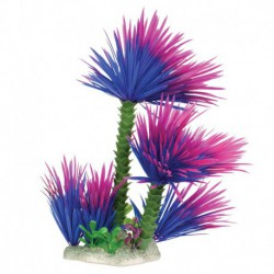 UT Purple Water Palm
