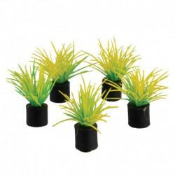 UT 5Pk Mini Plant Spring Grass