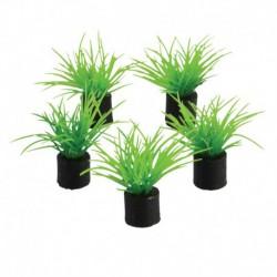 UT 5Pk Mini Plant Green Grass