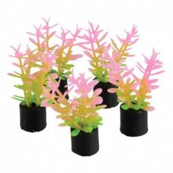 UT 5Pk Mini Plant Pink/Green