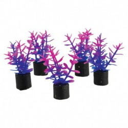 UT 5Pk Mini Plant Violet