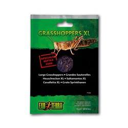 Grandes sauterelles EX T emballées sous vide, 15 g