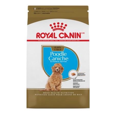 Poodle Puppy / Caniche Chiot 2 5 lbs 1 1 kg